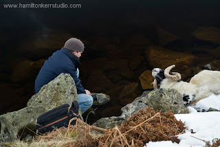 Kyle taking a closer look at a dead ram at Loch Lee, Glenesk, Scotland