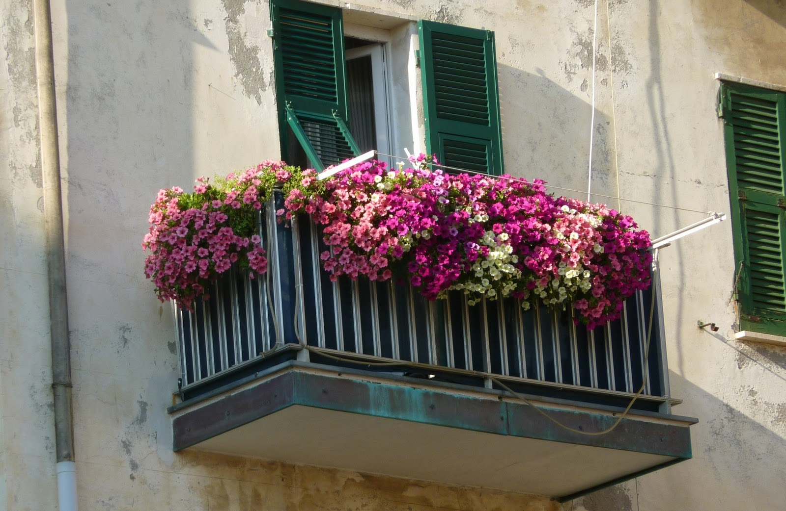 1000 images about balcony garden on pinterest balcony for Balcony flowers