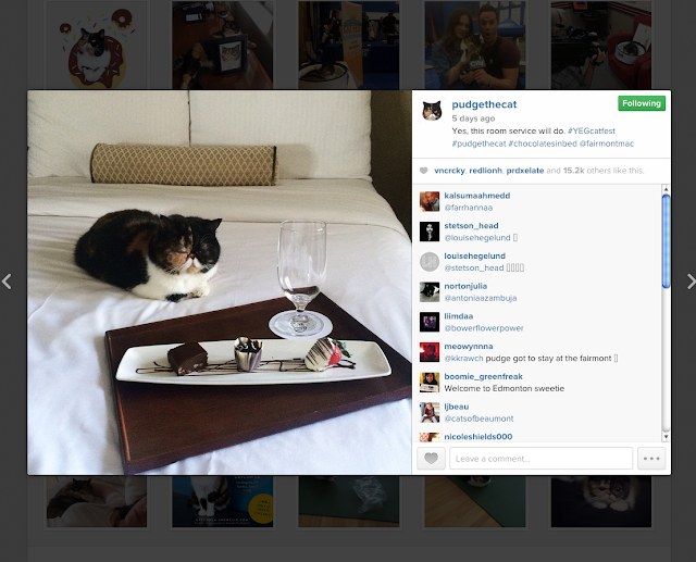 Pudge The Cat Famous Cat Instagram