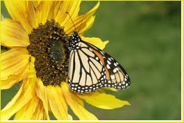 A TED Video:  <i><b>THE BEAUTY OF POLLINATION</b></i>