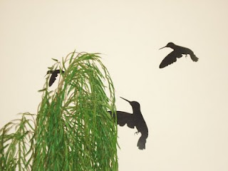 adesivos de parede com pássaros