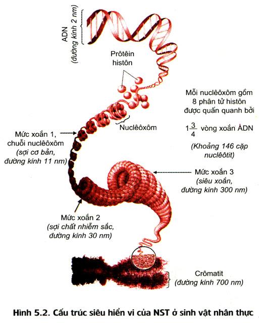 cấu trúc siêu hiển vi của nst