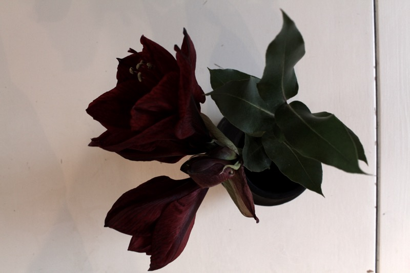 Chritsmas flowers