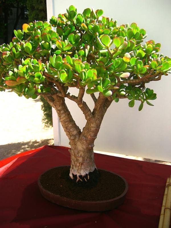 Bonsai Plants Html Amazing Home Design 2019