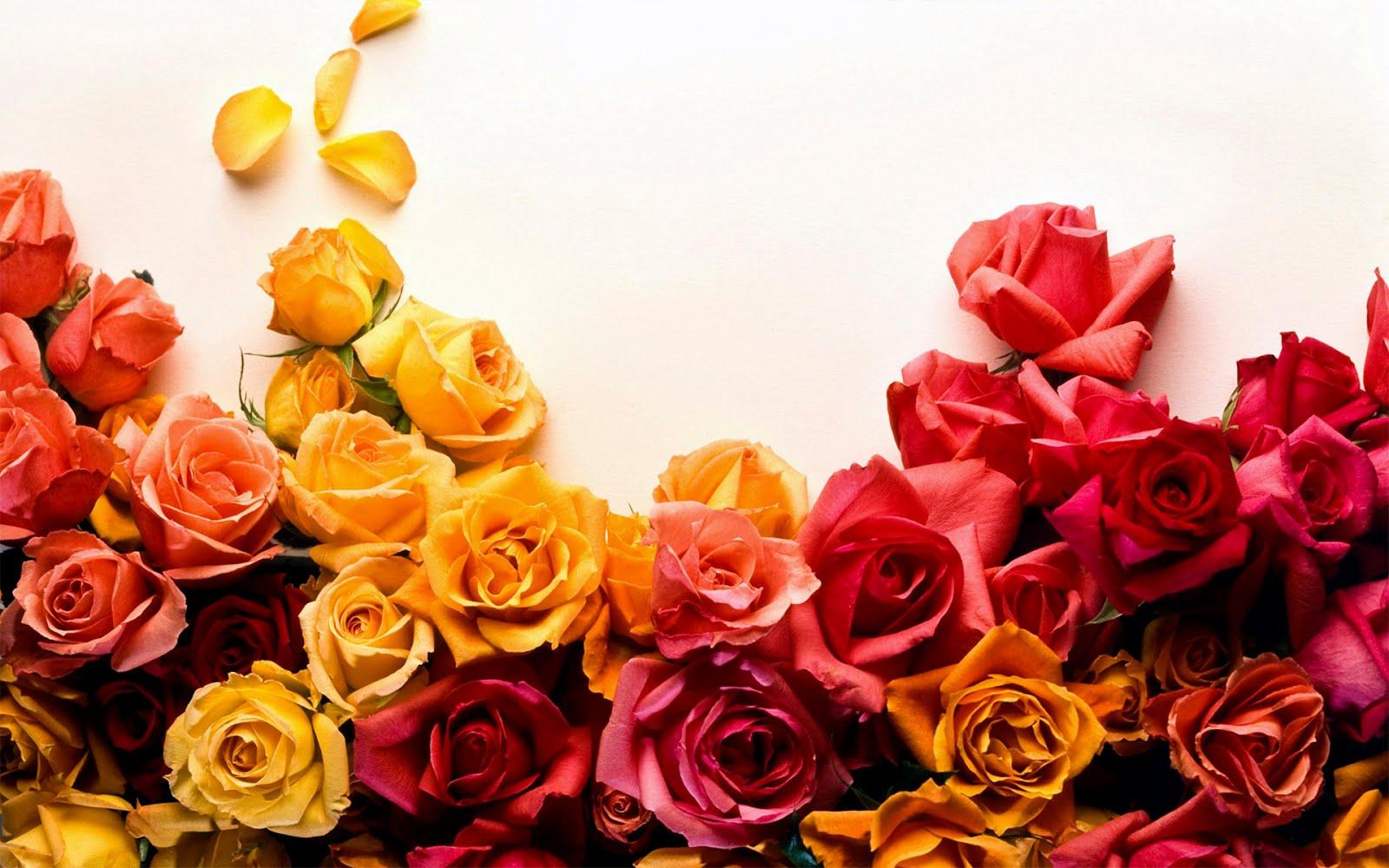 http://3.bp.blogspot.com/-kyYw1EVG_PM/TzBQJYVzAII/AAAAAAAAHxo/sjOURYbS8Es/s1600/hq-flowers-desktop-wallpaper1.jpg