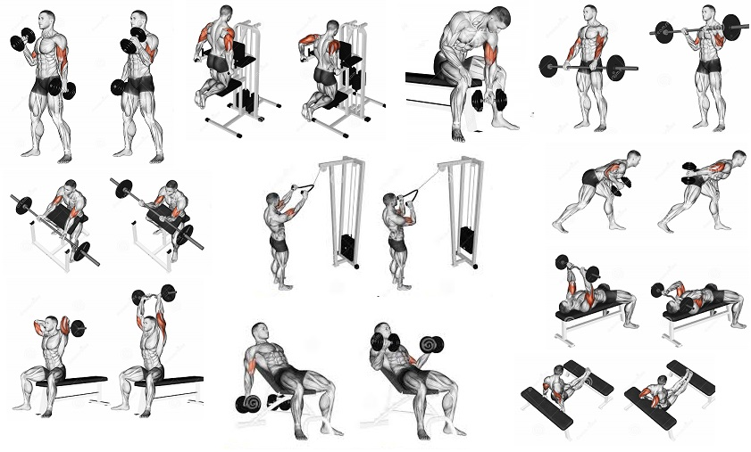 Workouts for Arm Strength and Muscle