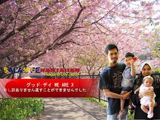 Seindah Sakura