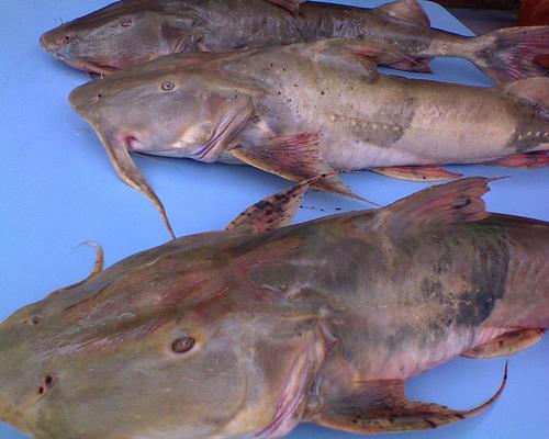 Resepi Ikan Baung Kenerak Masak Kari
