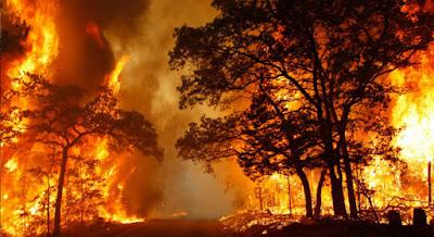 6 Kebakaran Hutan Terbesar Sepanjang Sejarah Dunia