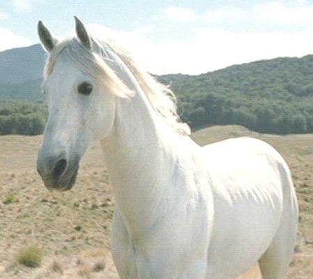 hvad hedder pippis hest på dansk