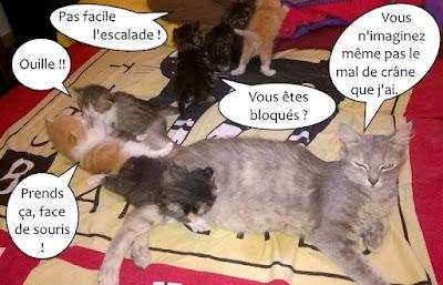 La belle Cadix et ses chatons.