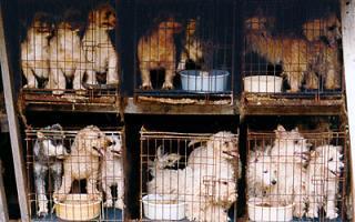 venta de perros | venta de animales