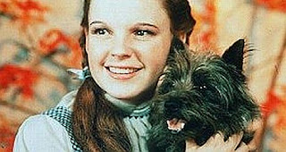 Band naam Toto verklaard - Cairn terrier Toto with Judy Garland in the Wizard?Oz