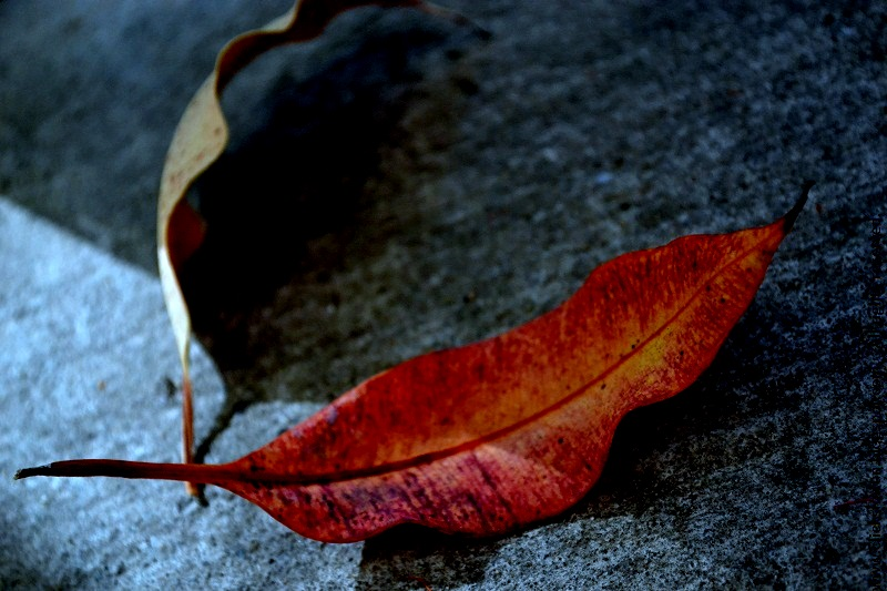 autumn fall dried leaves nature photos photography