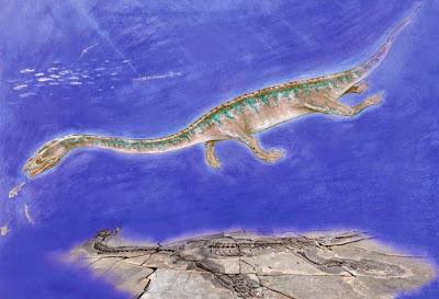 Wangosaurus