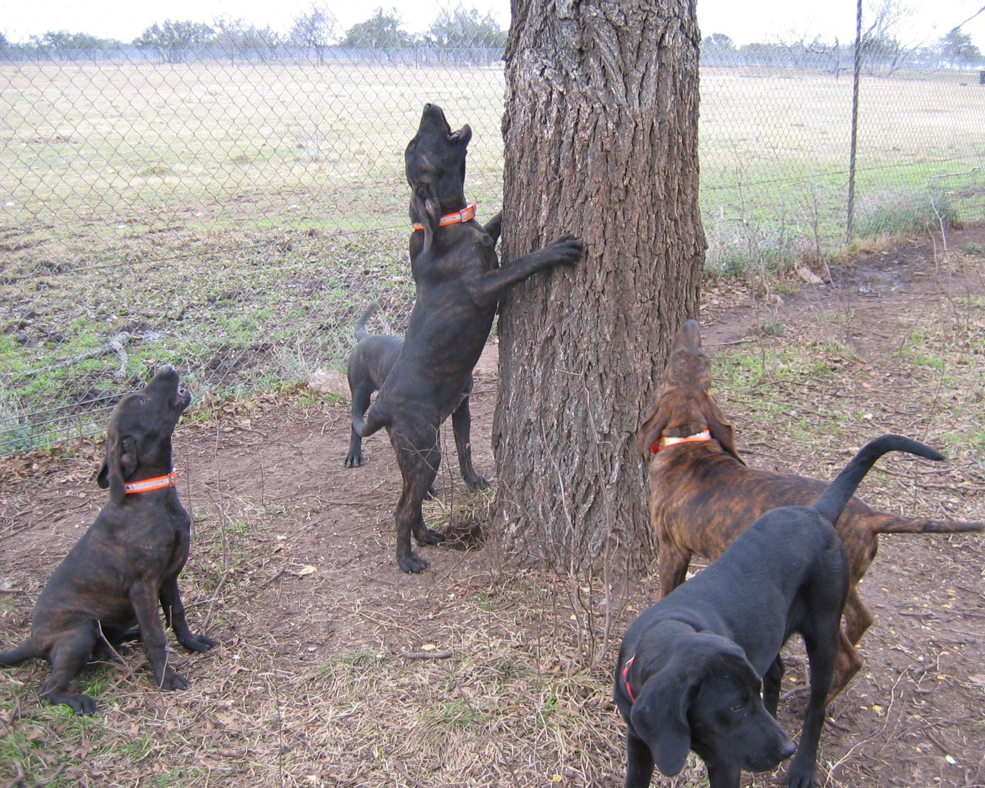 Game Dog Kennels In North Carolina