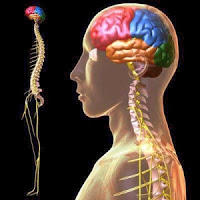 Multiple Sclerosis, Upper Cervical Care, Head Trauma