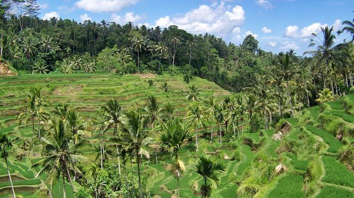 Bali y Gili Trawangan