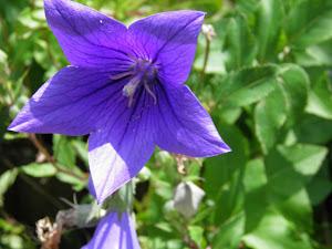 田舎不動産 Blog の花