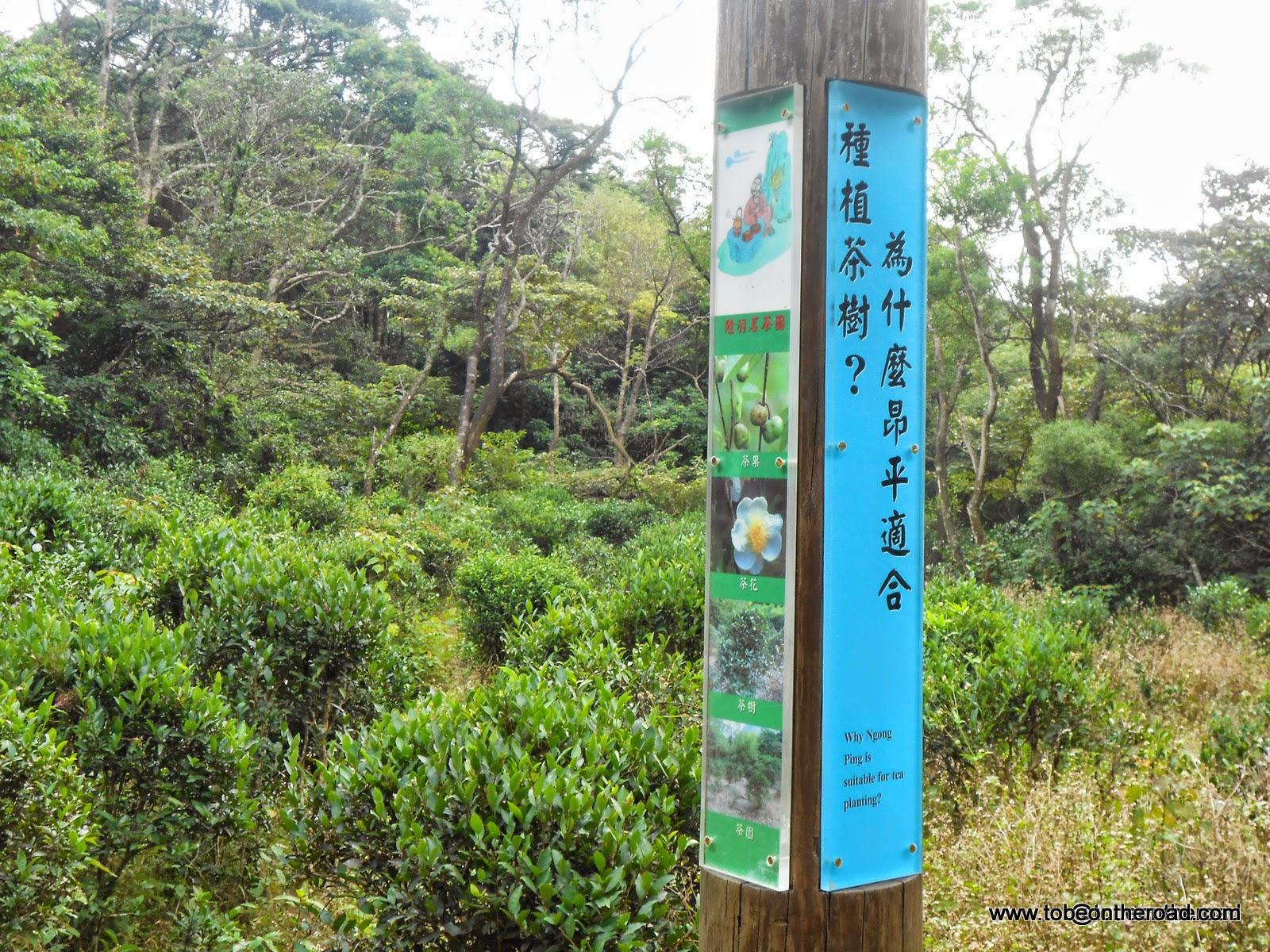 Hiking,Hongkong,Trail,South East Asia