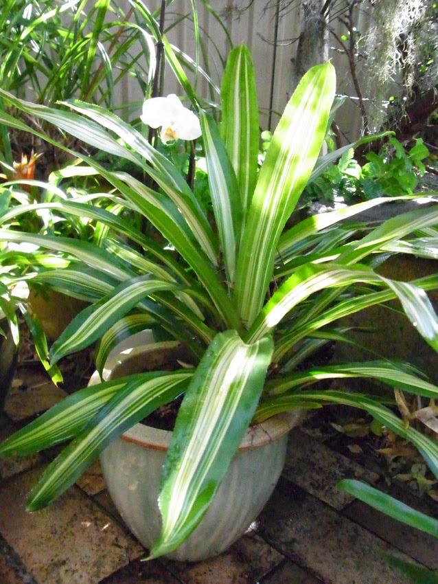 Garden amateur: Winter's pleasant depths