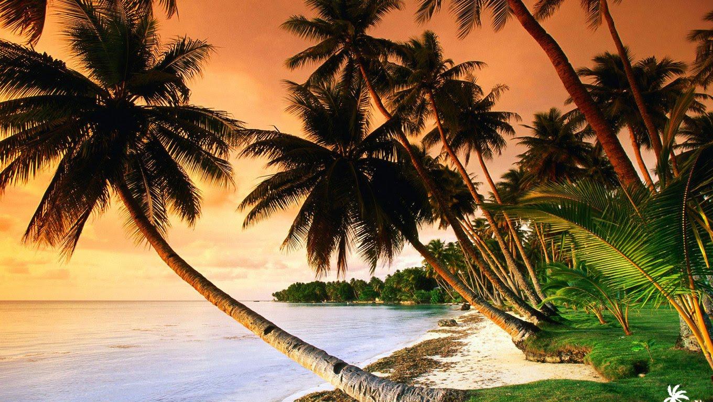 http://3.bp.blogspot.com/-l-nPudeRwJE/Tb7cVxvrxKI/AAAAAAAAIrs/zd2mNekX5wc/s1600/beach-palm-trees-on-sunset-1920x1200-1360x768.jpg