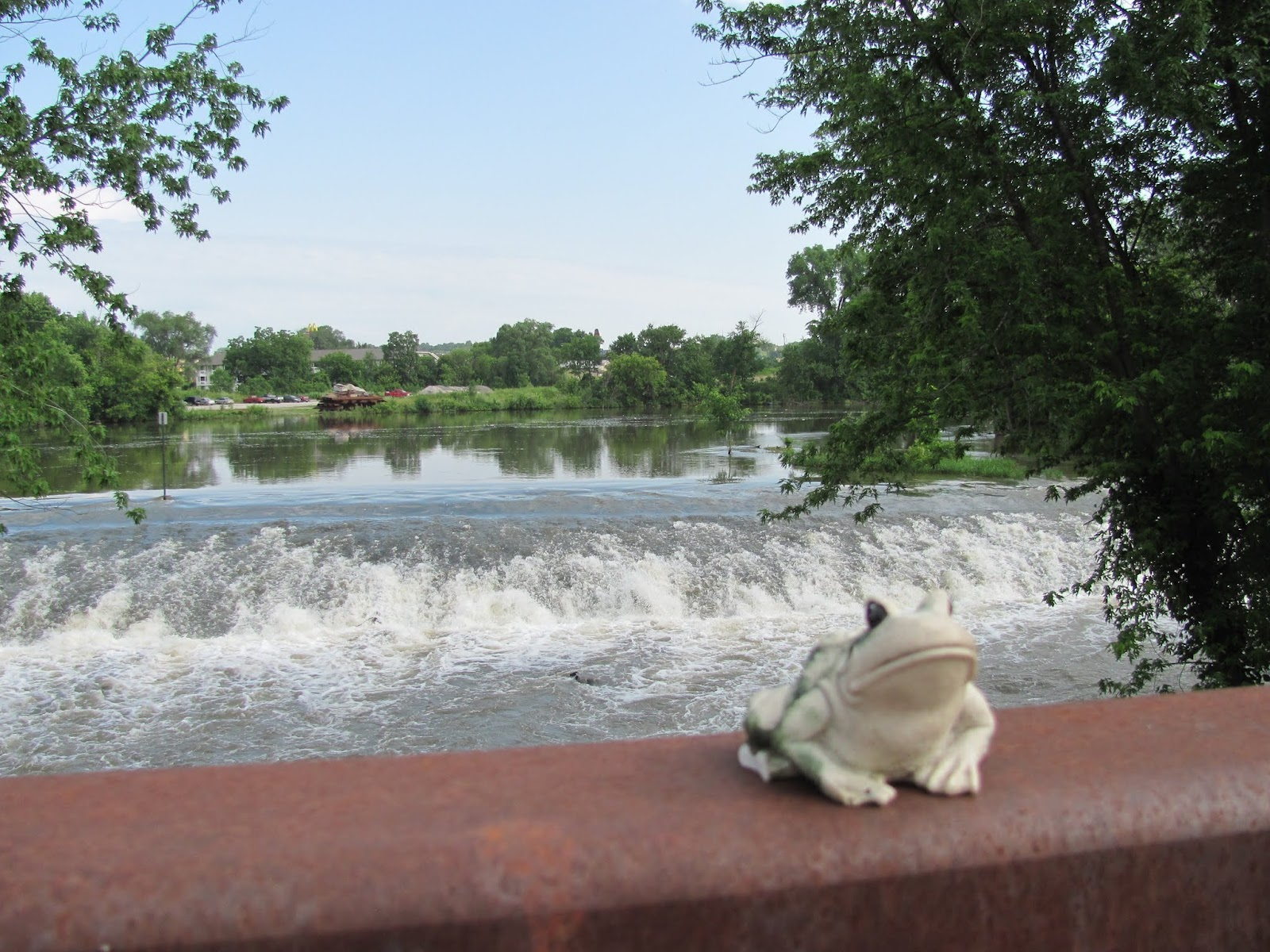 Frog poses on the spillway on the Iowa River Power bridge in Coralville, Iowa