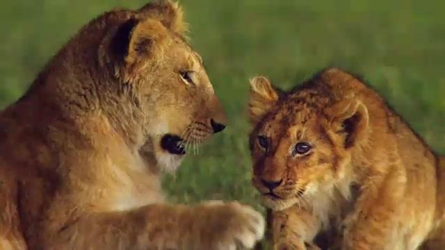 Beautiful Animals Safaris: Safari Amazing ! Beautiful Animal Safari