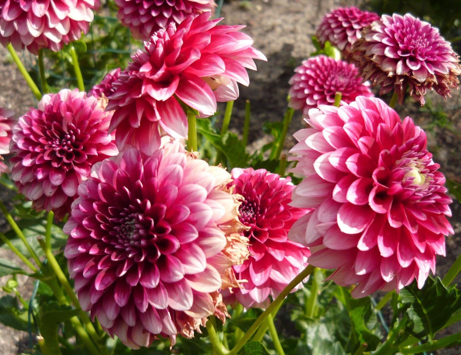 W W Nursery Landscaping 9 Easy Summer Flowers