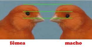 Diferença Macho/Fêmea