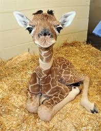 http://preguntasdelmillon.blogspot.com/2016/01/fotos-hermosas-de-animales-bebes.html