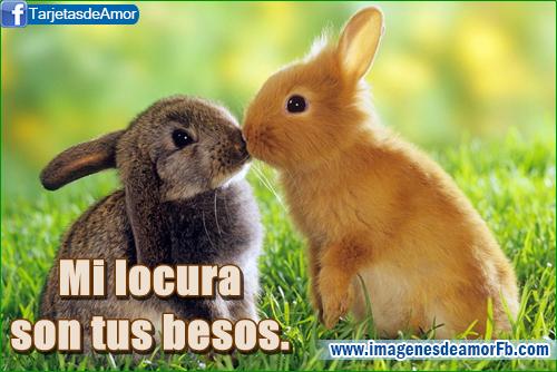 postales de amor con imagenes de conejos