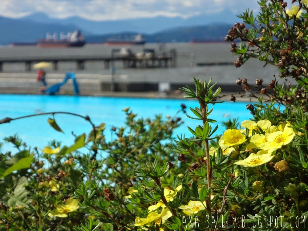 View of yellow flowers growing near Kitsilano Public Pool, view of English Bay tankers in the background
