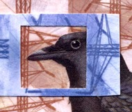Collaged crow