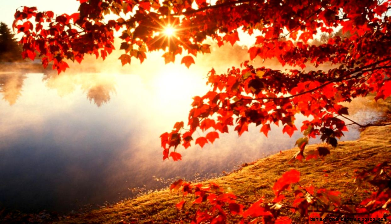 Morning red maple leaf wallpaper1366x768   Imgur