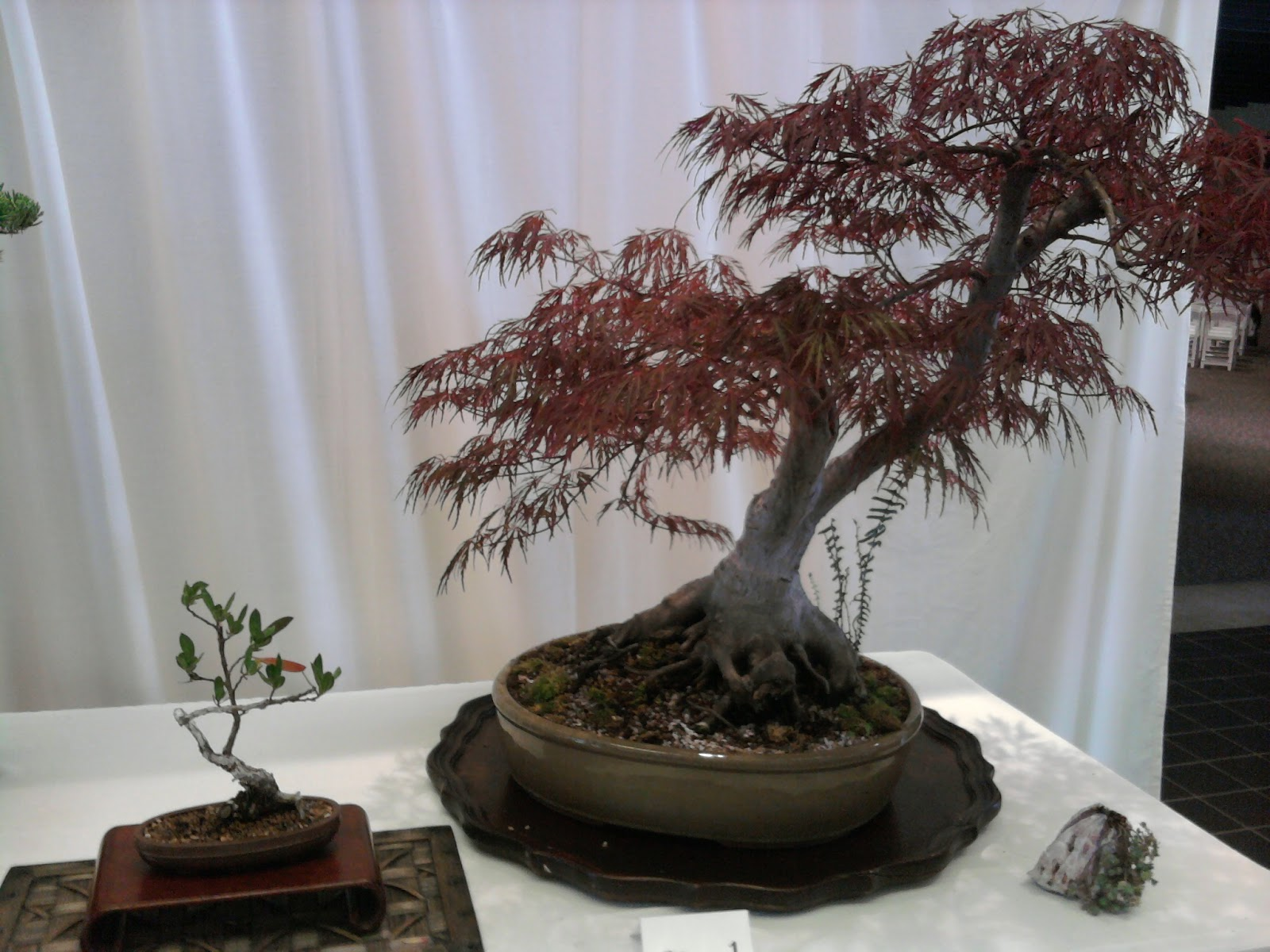 Yorktown Bonsai June 2012