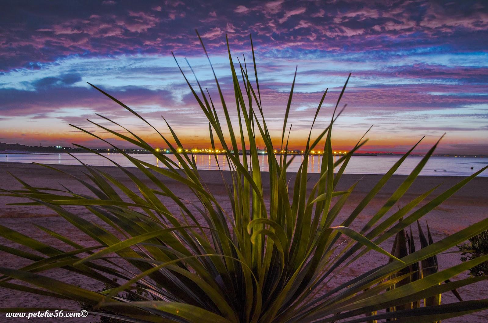 un amanecer en Rota visto detrás de un cactus en el paseeo