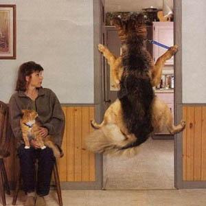 Imagenes Graciosas de Perros parte 2