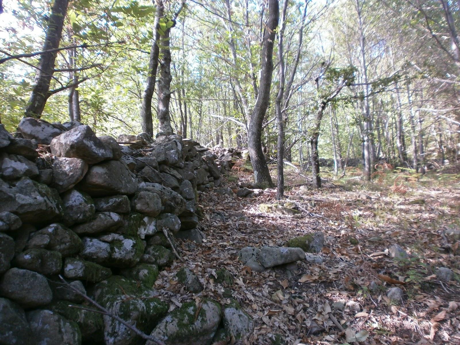 Appennino terra di frontiera nei boschi for Nei progetti domestici di terra
