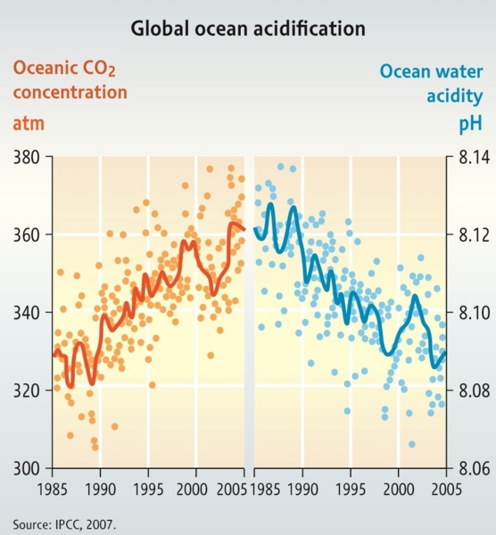 effects of ocean acidification and global warming Global warming—which causes ocean acidification and contributes to coral bleaching—is compounding the threats posed by destructive fishing techniques, coastal development, forest destruction, and aquaculture.