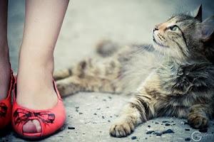 *felis catus - cat*