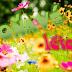 Voňavé léto aneb čtení s květinami
