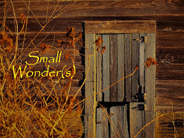 Small Wonder(s)--WordPress
