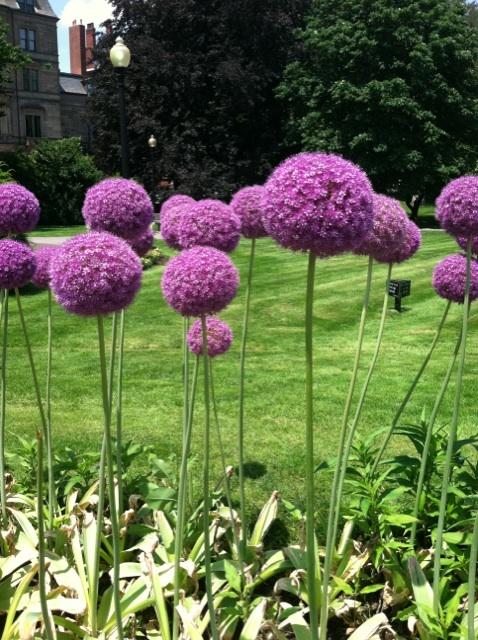 Jard n y terrazas fotos de jardines y plantas espectaculares - Plantas de jardin fotos ...