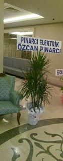 ısparta çiçekçi, dracena marginata gönderimi