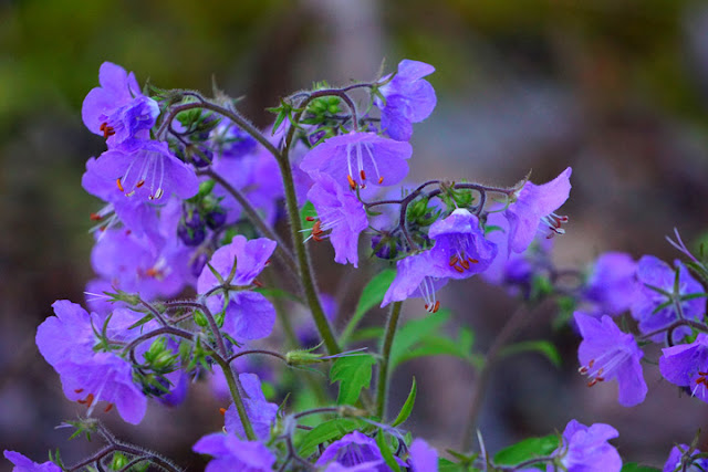 Blooming shrubs and wildflowers