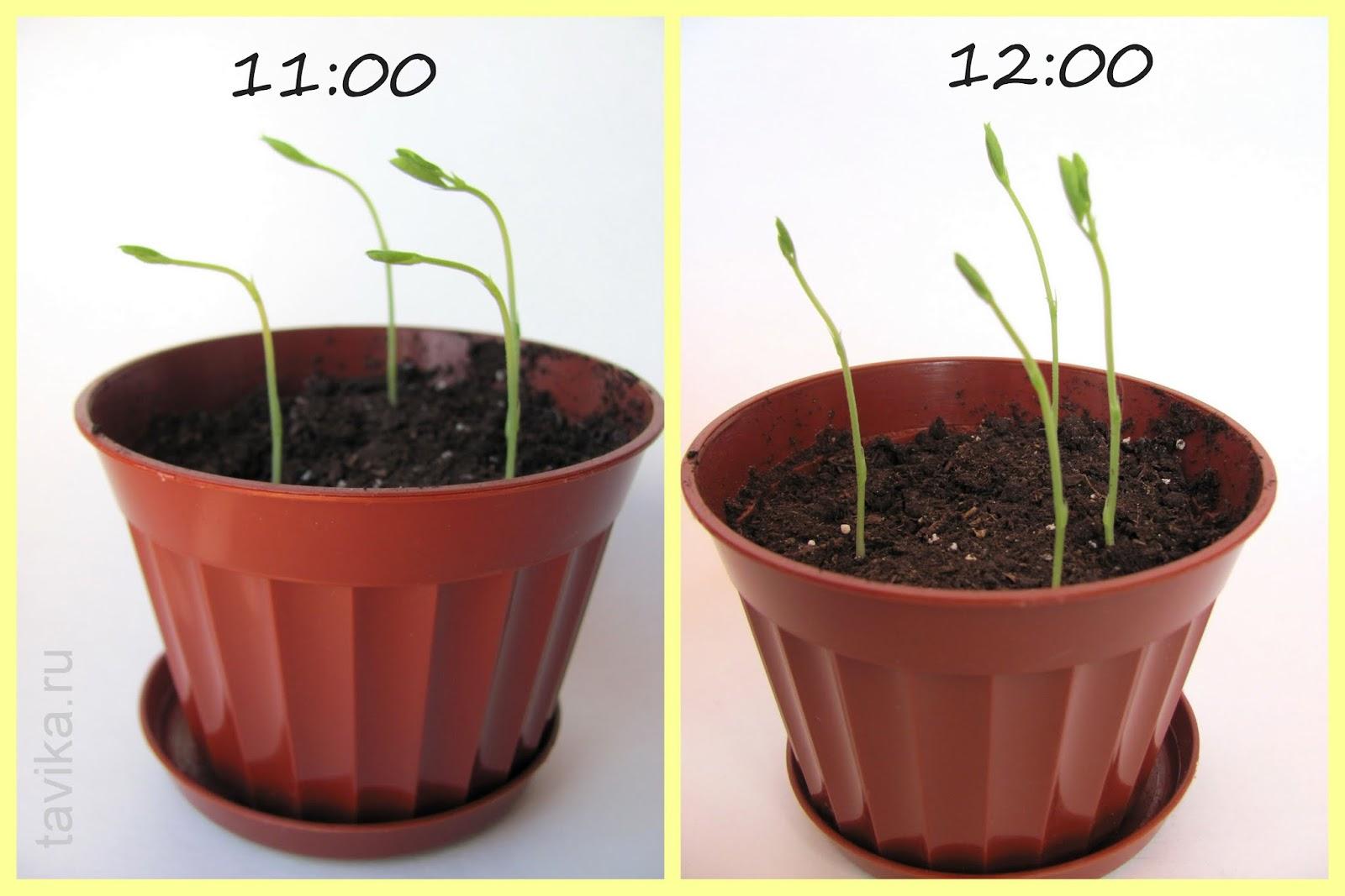 Занятие для детей на тему растения