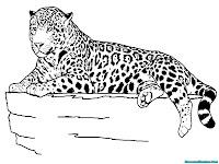 Lembar Mewarnai Jaguar Duduk Diatas Batu