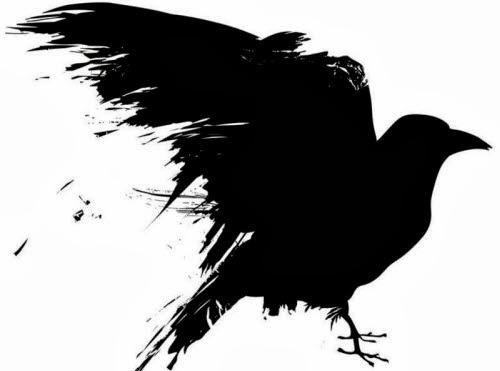 La increíble inteligencia de los cuervos