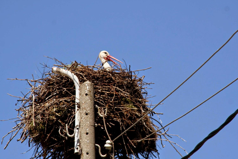 A stork cooling off